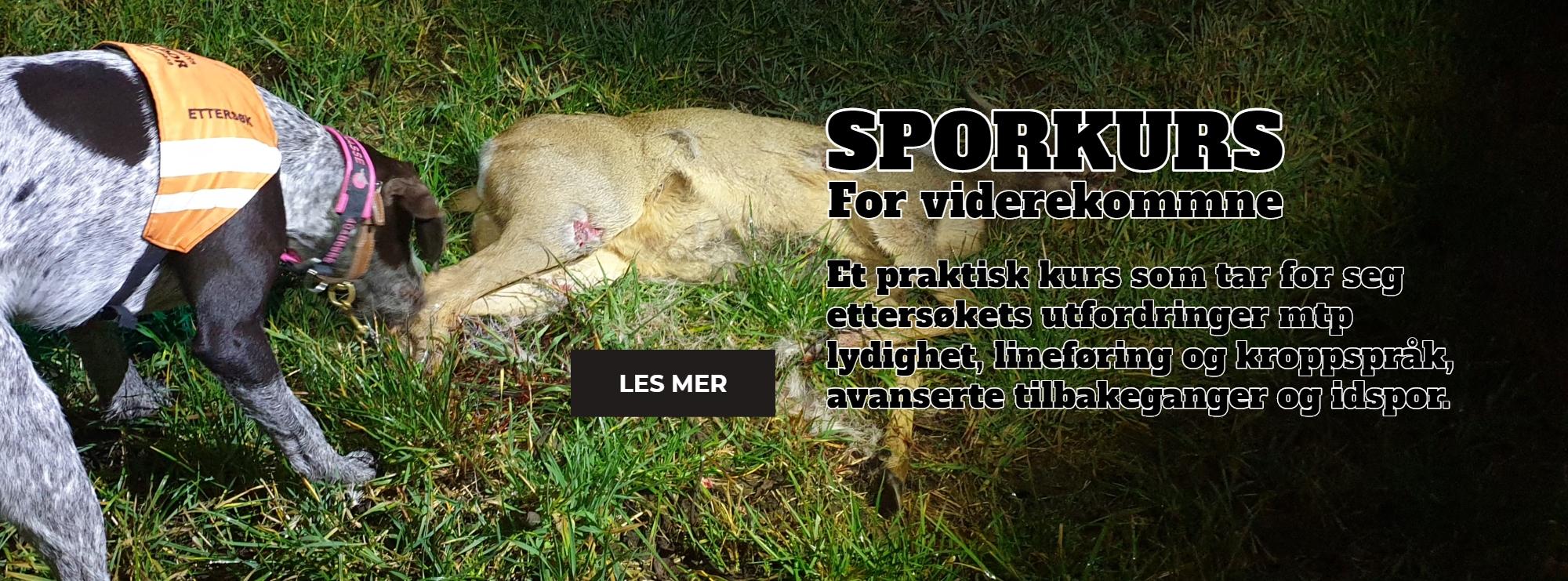 Sporkurs_VG